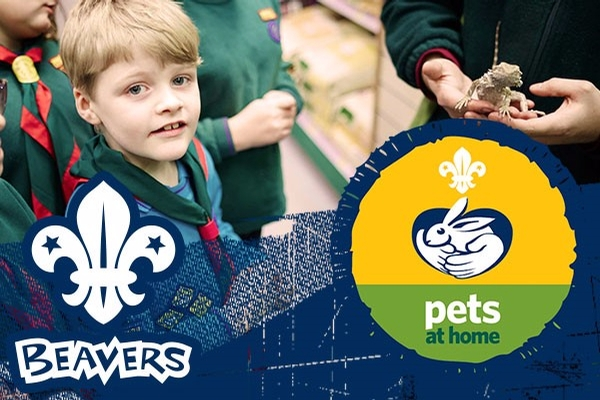 Beaver Scout Animal Friend Workshop